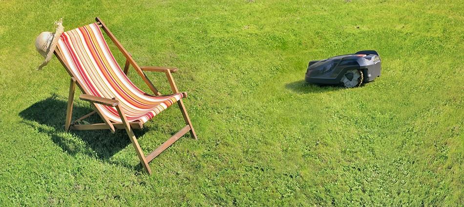 7 проблем газона: защита газонов от вредителей и болезней